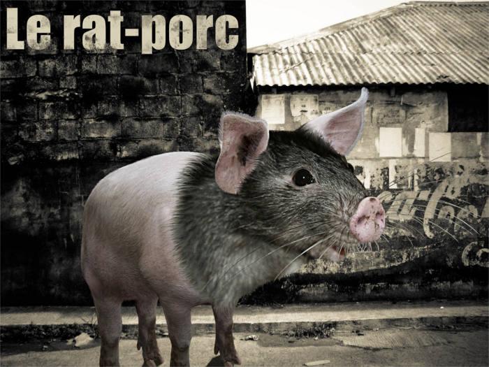 Le rat-porc
